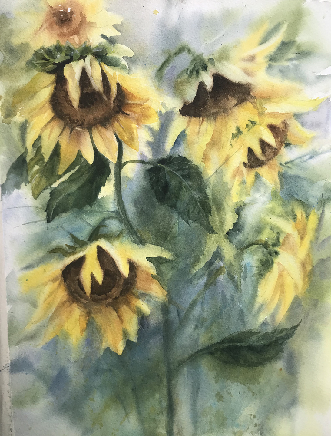 Claire_Simpson_Jones_Sunflowers_Watercol
