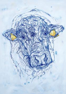 Nosy Bull
