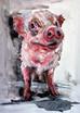 Gus, the perfect piggy