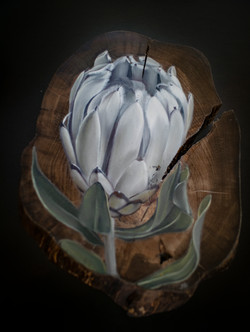 Velvet Protea