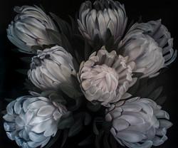 'Proteas'