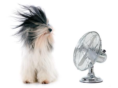 Summer Pet Safety