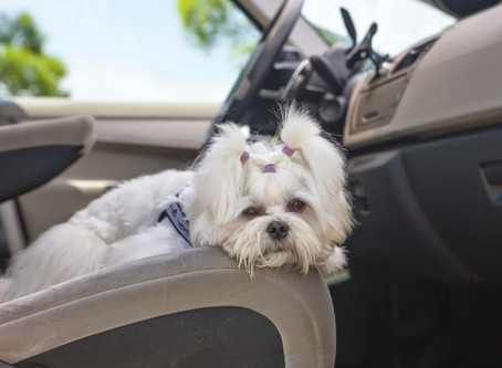 Car Sickness In Pets