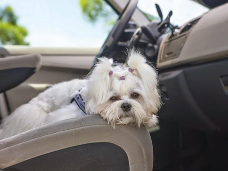 Car Sickness In Pets