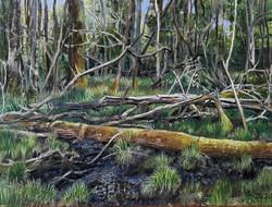 Woodland marsh, Finings wood