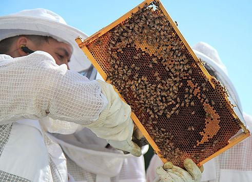 Mehilaiset ja Teemu 2.jpg
