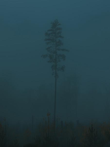 SKANDINAVISK FINE ART