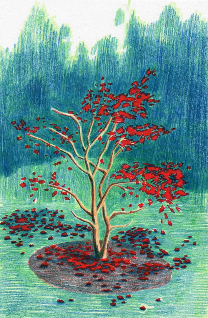 Japanese Maple (Autumn)