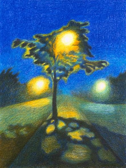 Lamplight Through Branches