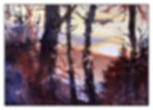 thru the trees.jpg