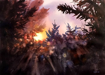 sunset thru the pines 2.jpg