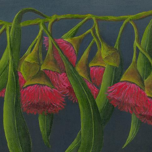 Edna Eucalyptus