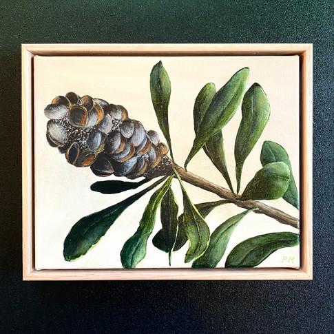 Beatrix Banksia