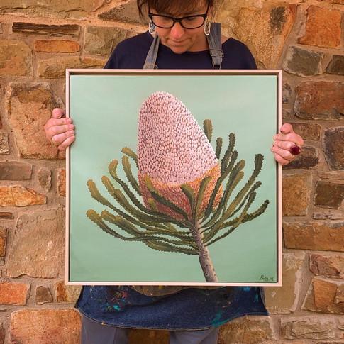 Banksia Babe