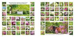 LILACS book preview 68-69 Marquette Park