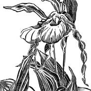 Lady's Slipper Pair - Botanical Print