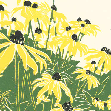 Black Eyed Susan's - Botanical Print