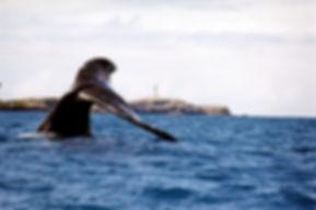 baleias 5.jpg