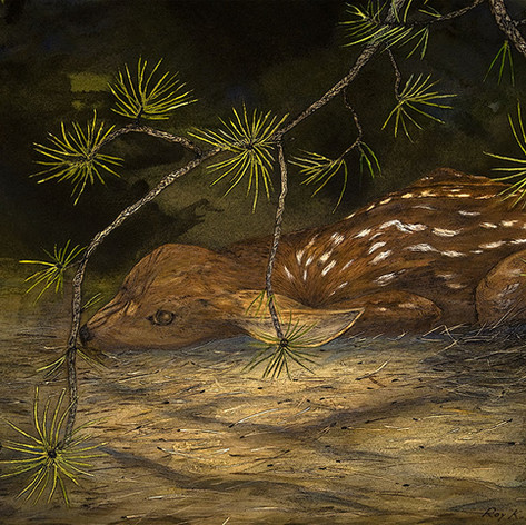 Fawn In Forest