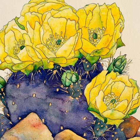 Cactus Blossoms