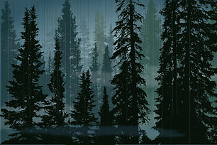rain-forest_1_1.jpg