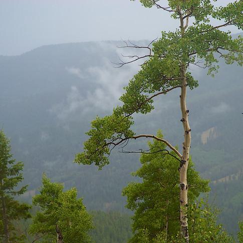 Seasons of Aspen