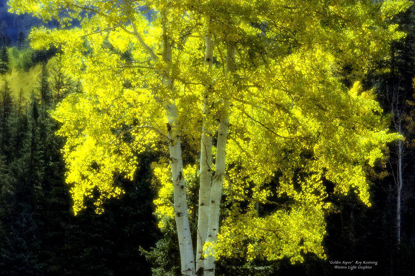 pixels_golden-aspen_24x36_edited.jpg