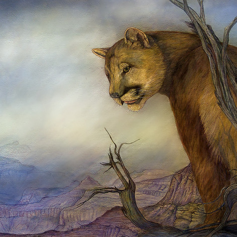 Grand Canyon Puma