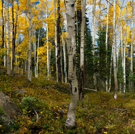 Seasons of Aspen