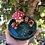 Thumbnail: Mushroom village
