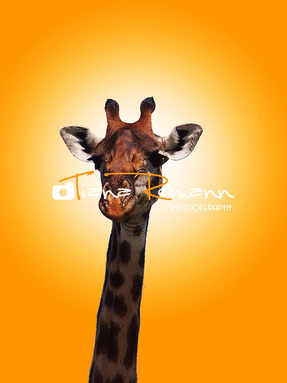 Groovy Giraffe (1).jpg