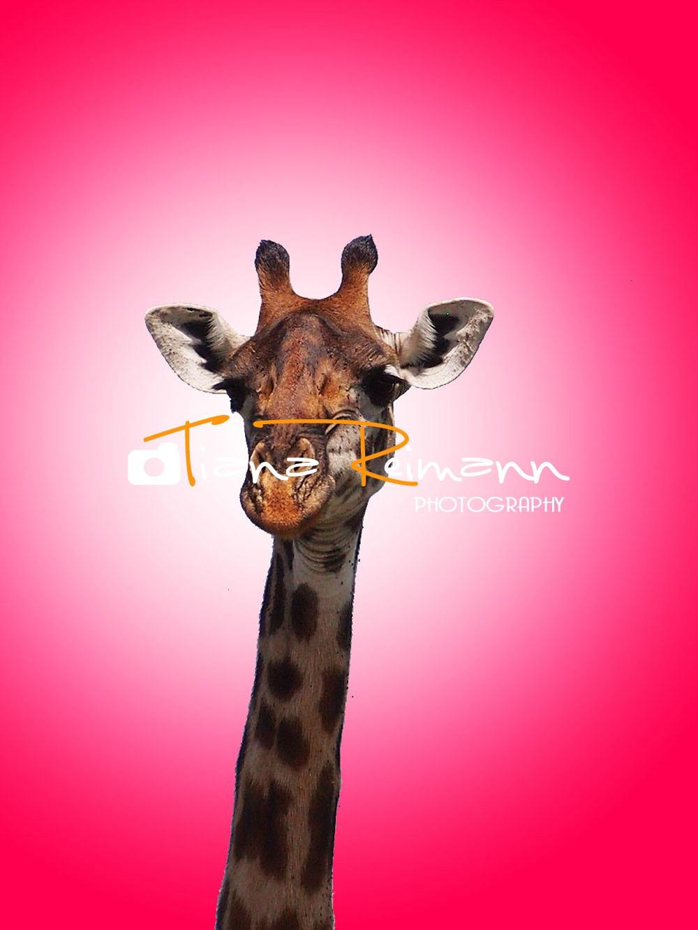 Groovy Giraffe (2).jpg
