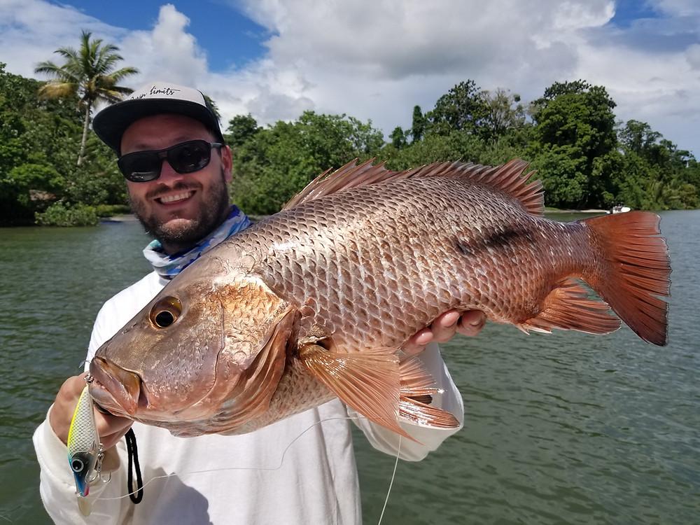 Big Mangrove Jack - Baia Sportfishing Lodge