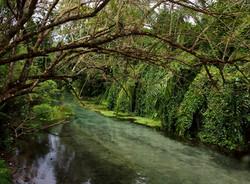 Crystal Springs - Liamo Reef Resort