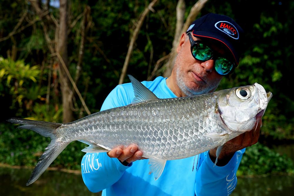 Tarpon - Baia SPortfishing PNG