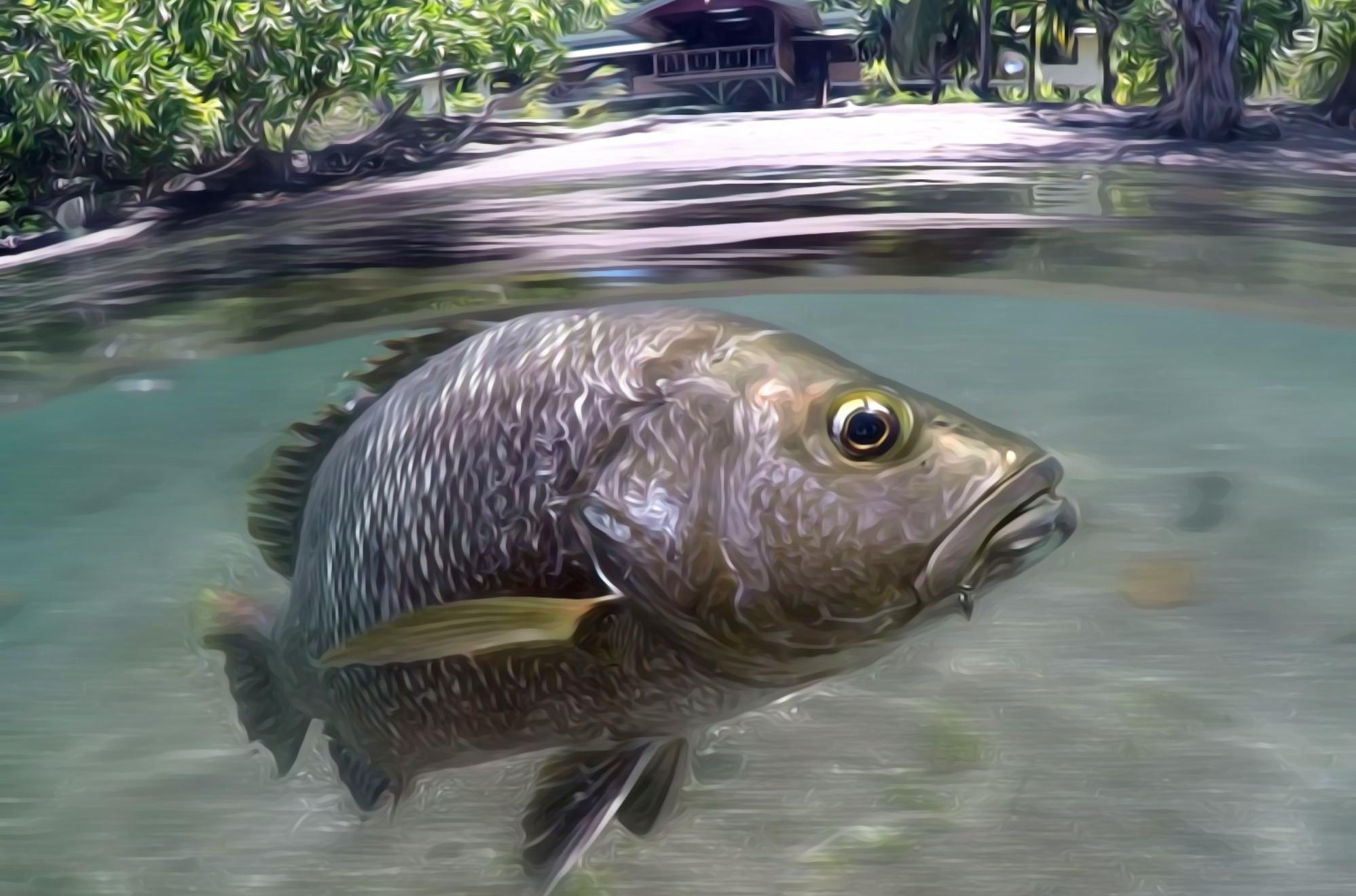 Black Bass - Baia Sportfishing - Papua New Guinea