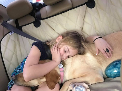 Diabetic alert dog keeps her little girl safe, Sage & Remmy