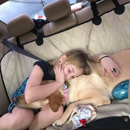 Diabetic alert dog keeps her little girl safe, Sage & Remmy