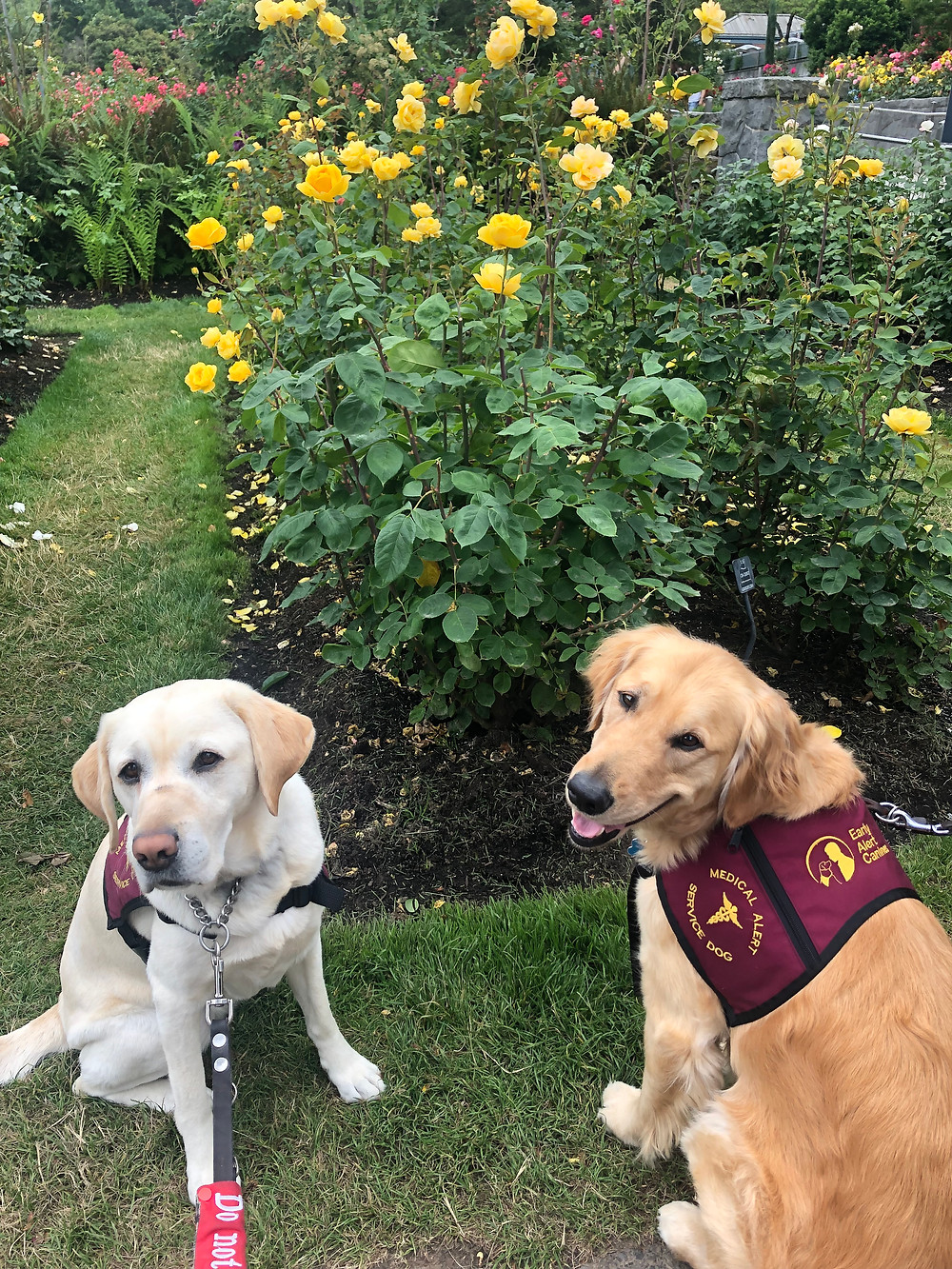 Ricki and Sumner at the rose garden, posing in front of a large rose bush with yellow roses. Sumner is smiling, and Ricki looks unamused.