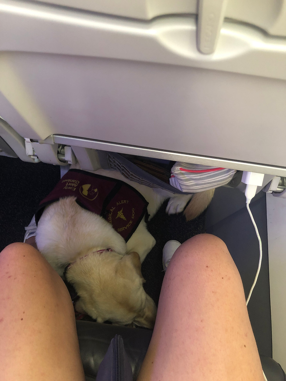 Ricki tucked under the seat in front of me on the plane ride back. She is squished in a little tighter and her head is down.