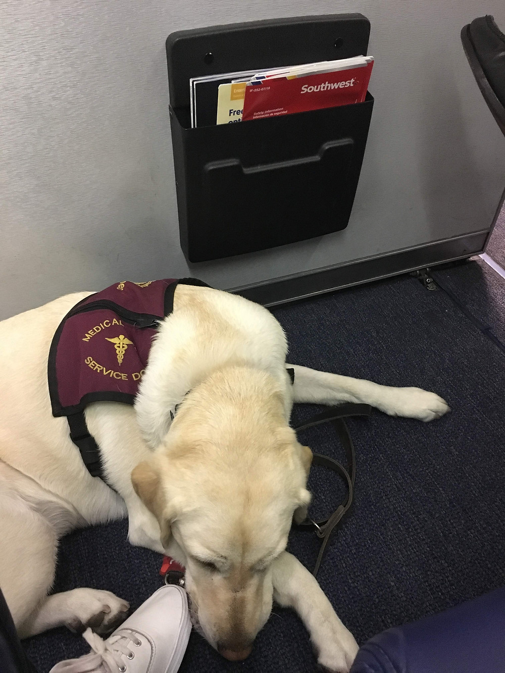 Ricki laying on the floor of a Southwest airplane, on the bulkhead row.