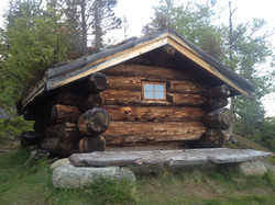 Mjuken hyttegrend Rennebu