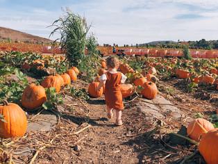 picking pumpkins at tanaka farms