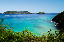 Little_Tobago_1.jpg