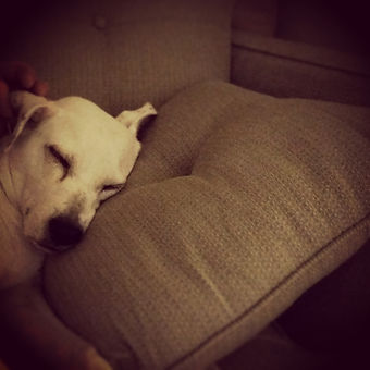 Sleeping dog: Allow your special pet to rest easy while you are away