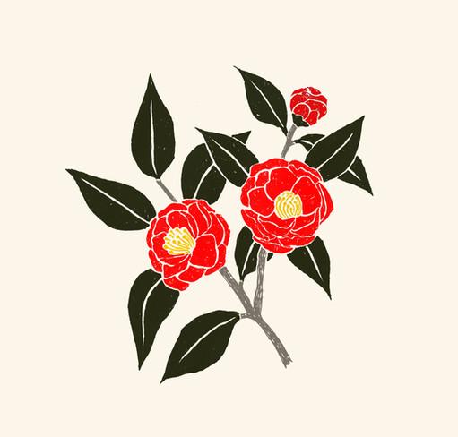 Camellia  //  Katherine Shapiro