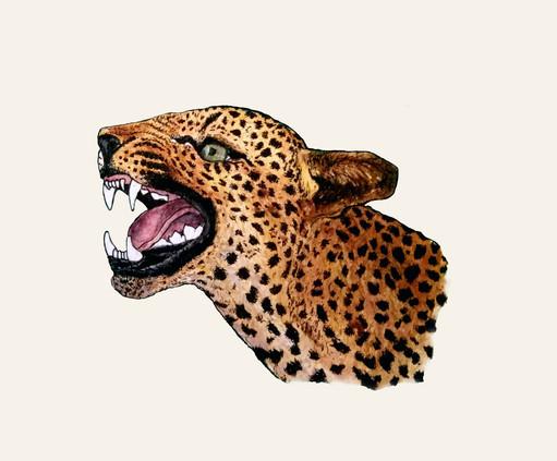 Leopard  //  Katherine Shapiro