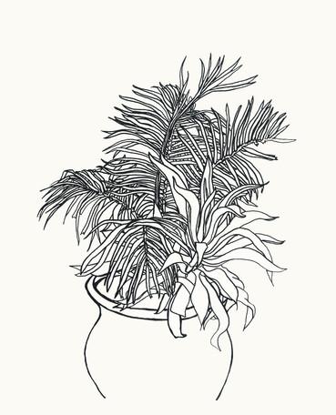 Plants, leaves fin.jpg