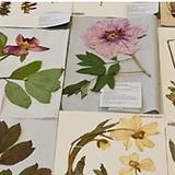 Herbarium.png