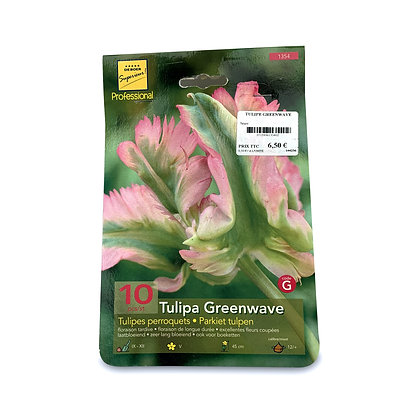 Tulipe greenwave - bulbes